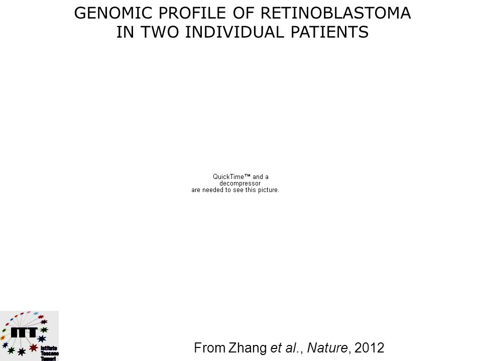 (From Zhang et al., Nature, 2012) FEATURES OF HUMAN RETINOBLASTOMA ARE RERMARKABLY CONSERVED Original tumor Xenograft from above