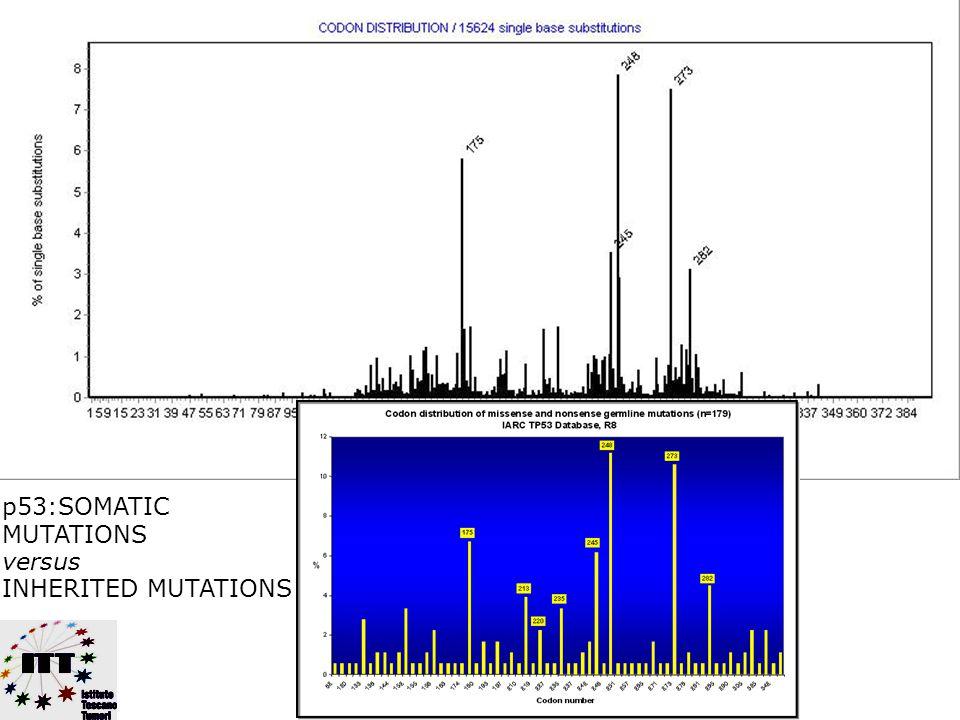 p53:SOMATIC MUTATIONS versus INHERITED MUTATIONS