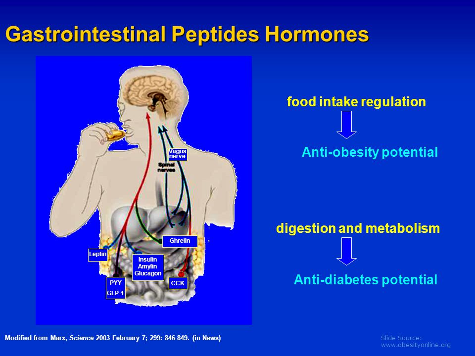 Slide Source: www.obesityonline.org Modified from Marx, Science 2003 February 7; 299: 846-849. (in News) Gastrointestinal Peptides Hormones food intak