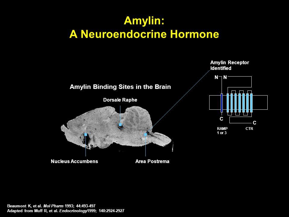 Amylin Binding Sites in the Brain Amylin: A Neuroendocrine Hormone Amylin Receptor Identified C C NN RAMP 1 or 3 CTR Dorsale Raphe Nucleus AccumbensAr