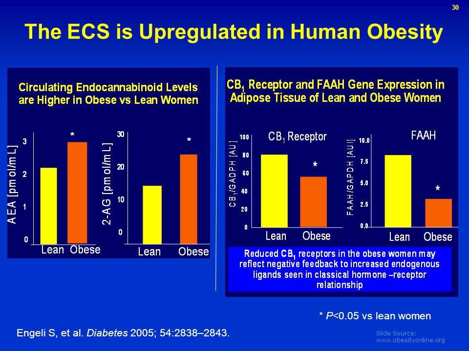 Slide Source: www.obesityonline.org Engeli S, et al. Diabetes 2005; 54:2838–2843. * P<0.05 vs lean women The ECS is Upregulated in Human Obesity 30