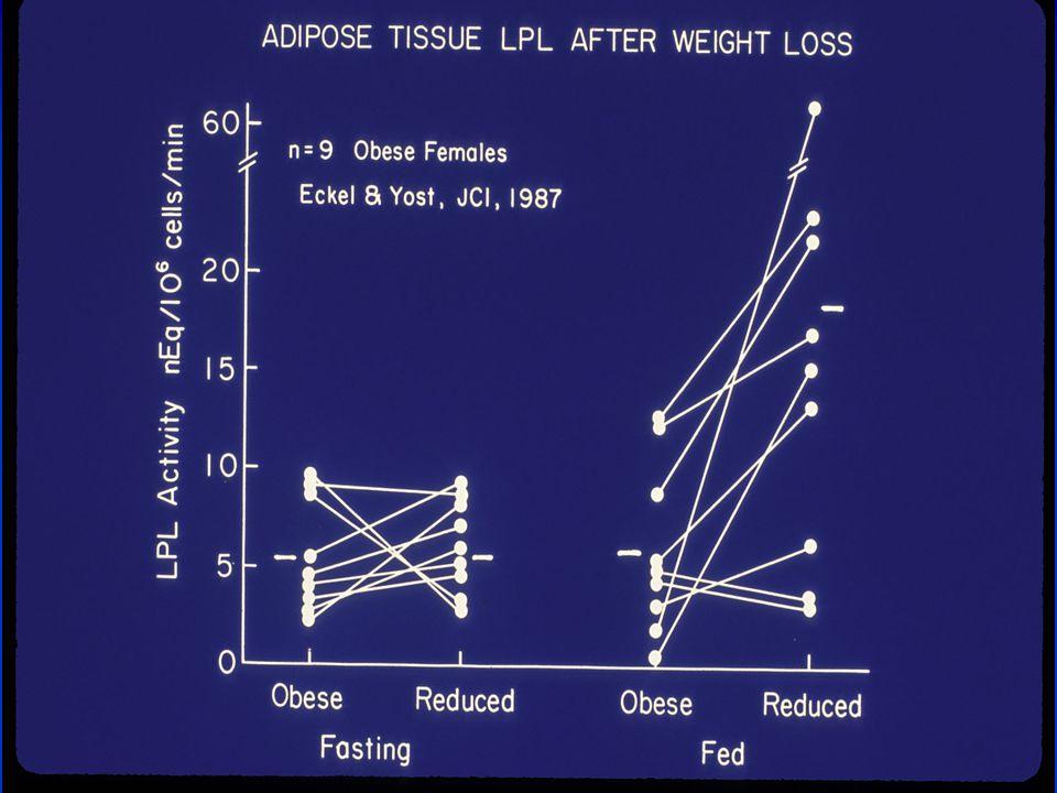 Slide Source: www.obesityonline.org