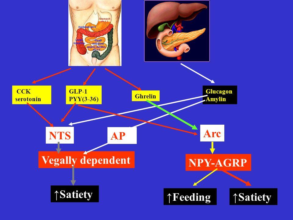CCK serotonin GLP-1 PYY(3-36) Ghrelin Glucagon Amylin NTS AP Arc NPY-AGRP ↑Feeding Vegally dependent ↑Satiety
