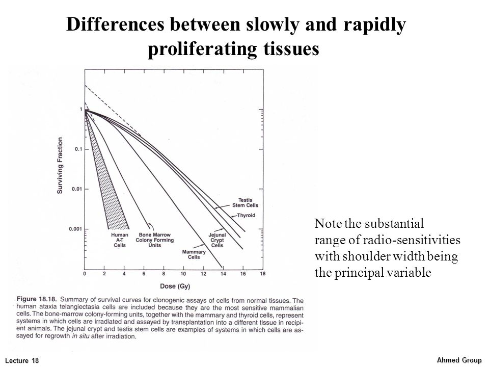 Ahmed Group Lecture 18 Note the substantial range of radio-sensitivities with shoulder width being the principal variable Differences between slowly and rapidly proliferating tissues