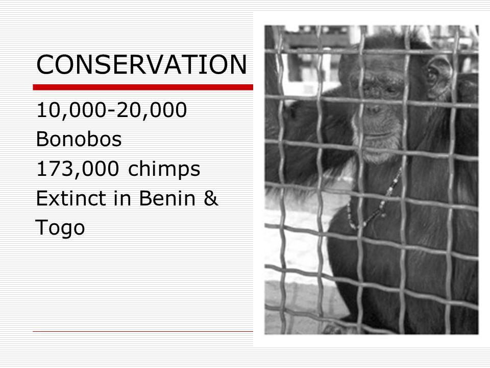 CONSERVATION 10,000-20,000 Bonobos 173,000 chimps Extinct in Benin & Togo
