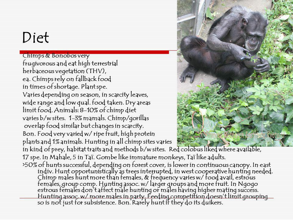 Diet Chimps & Bonobos very frugivorous and eat high terrestrial herbaceous vegetation (THV), ea. Chimps rely on fallback food in times of shortage. Pl