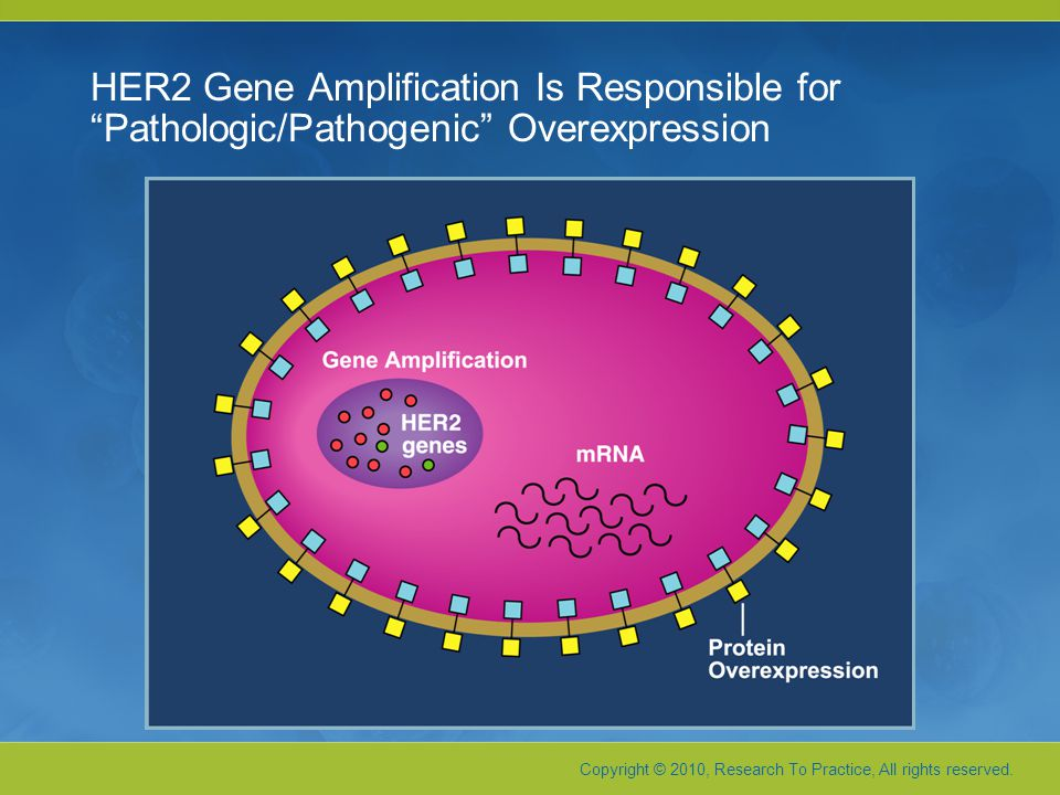 HER2 Gene Amplification Is Responsible for Pathologic/Pathogenic Overexpression