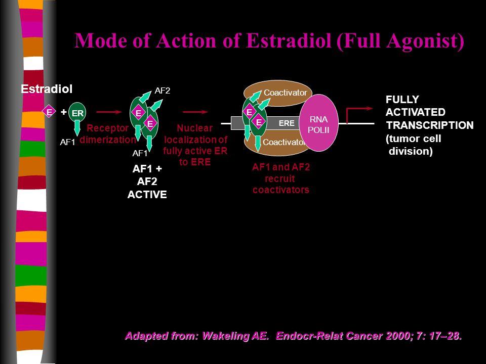Estradiol Coactivator AF1 ER E E E + AF1 + AF2 ACTIVE Receptor dimerization Nuclear localization of fully active ER to ERE Coactivator ERE RNA POLII FULLY ACTIVATED TRANSCRIPTION (tumor cell division) AF1 and AF2 recruit coactivators E AF2 AF1 E Adapted from: Wakeling AE.