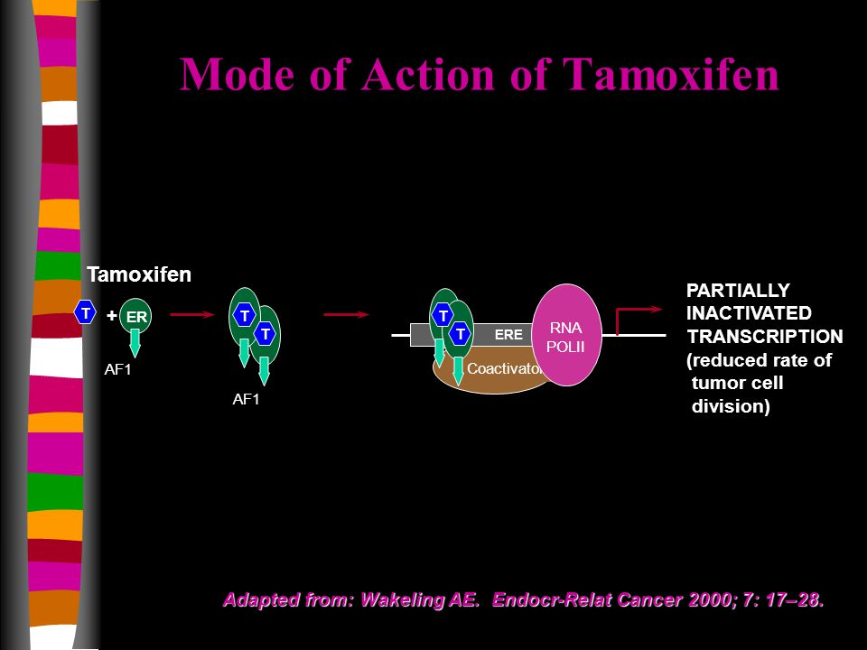 Tamoxifen Coactivator AF1 ER + ERE RNA POLII PARTIALLY INACTIVATED TRANSCRIPTION (reduced rate of tumor cell division) T T T T T AF1 Adapted from: Wakeling AE.