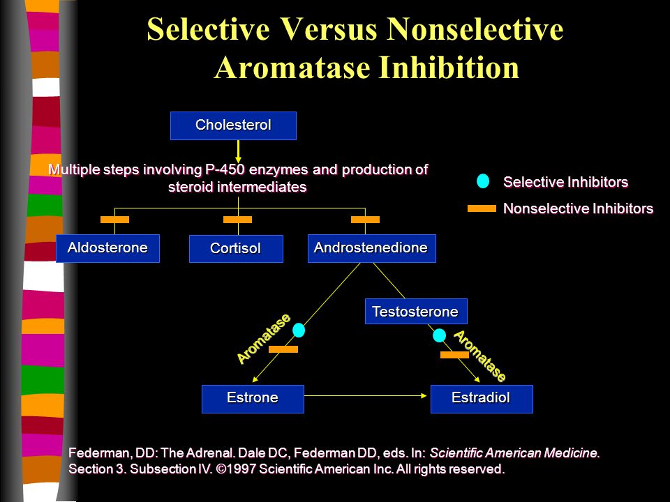 Multiple steps involving P-450 enzymes and production of steroid intermediates Selective Versus Nonselective Aromatase Inhibition Federman, DD: The Adrenal.