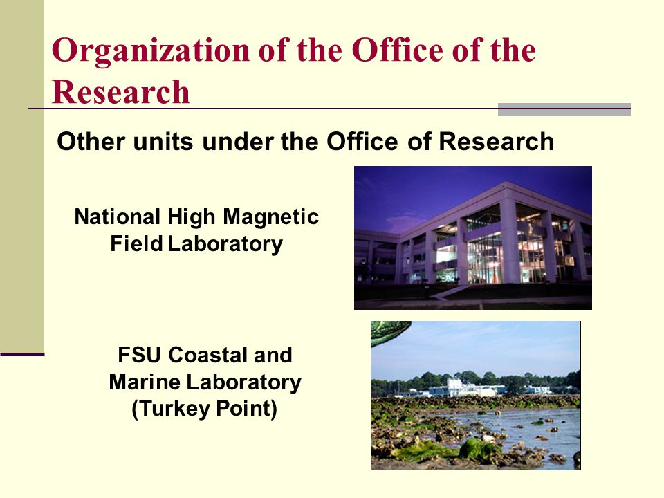 Organization of the Office of the Research Other units under the Office of Research National High Magnetic Field Laboratory FSU Coastal and Marine Laboratory (Turkey Point)