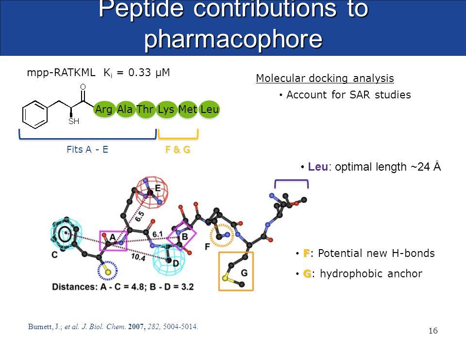Peptide contributions to pharmacophore Burnett, J.; et al. J. Biol. Chem. 2007, 282, 5004-5014. 16 Molecular docking analysis Account for SAR studies