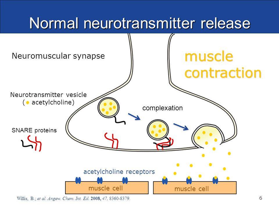 Normal neurotransmitter release Willis, B.; et al.