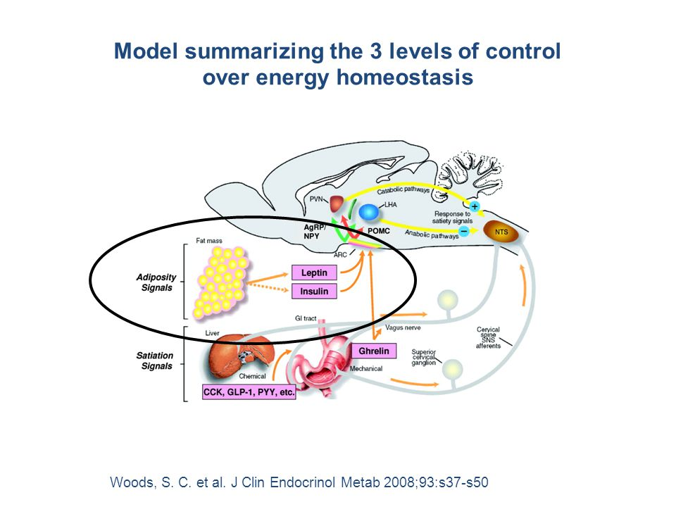 Woods, S. C. et al. J Clin Endocrinol Metab 2008;93:s37-s50 Model summarizing the 3 levels of control over energy homeostasis