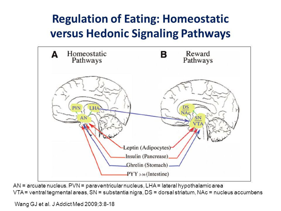 Regulation of Eating: Homeostatic versus Hedonic Signaling Pathways AN = arcuate nucleus. PVN = paraventricular nucleus, LHA = lateral hypothalamic ar
