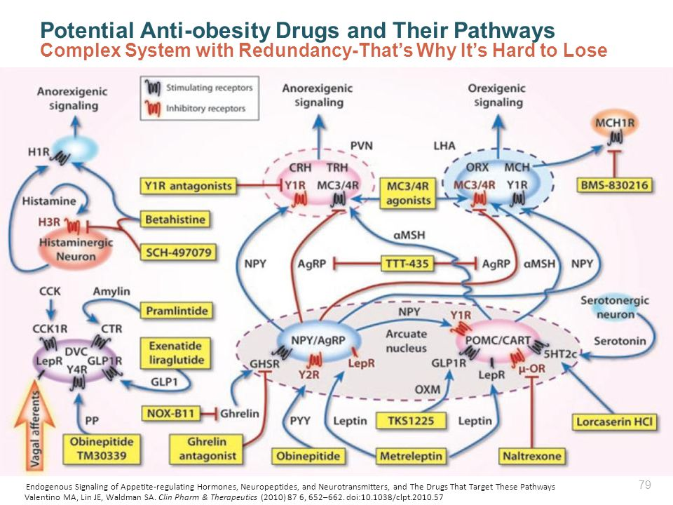 Potential Anti-obesity Drugs and Their Pathways Complex System with Redundancy-That's Why It's Hard to Lose Valentino MA, Lin JE, Waldman SA. Clin Pha