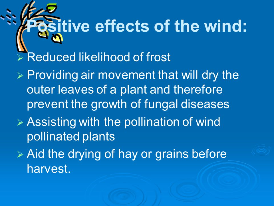 Positive effects of the wind:   Reduced likelihood of frost   Providing air movement that will dry the outer leaves of a plant and therefore preve
