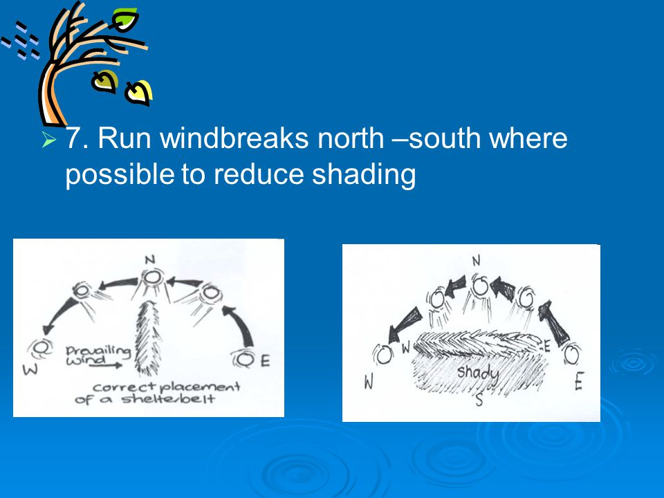   7. Run windbreaks north –south where possible to reduce shading
