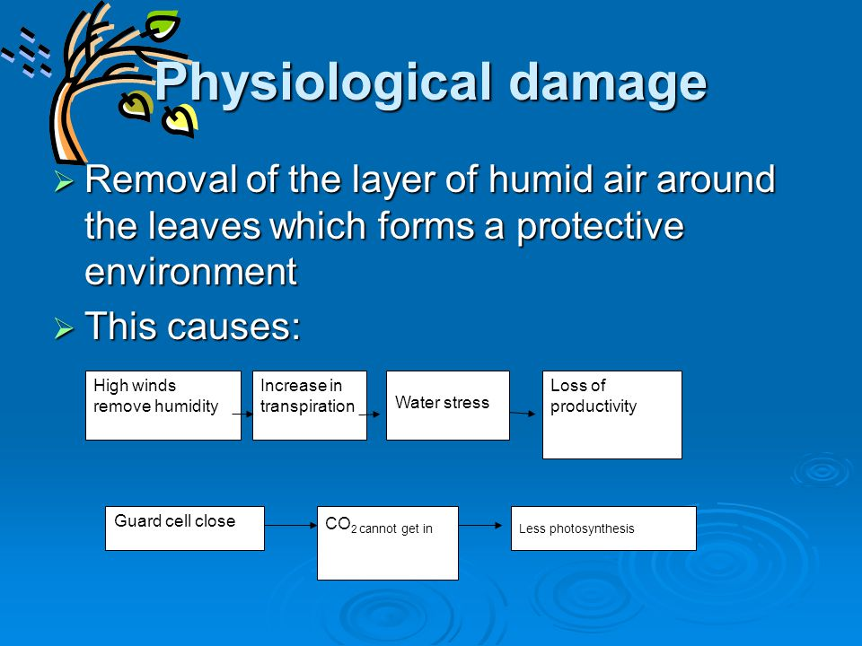 Physiological damage  Removal of the layer of humid air around the leaves which forms a protective environment  This causes: High winds remove humid