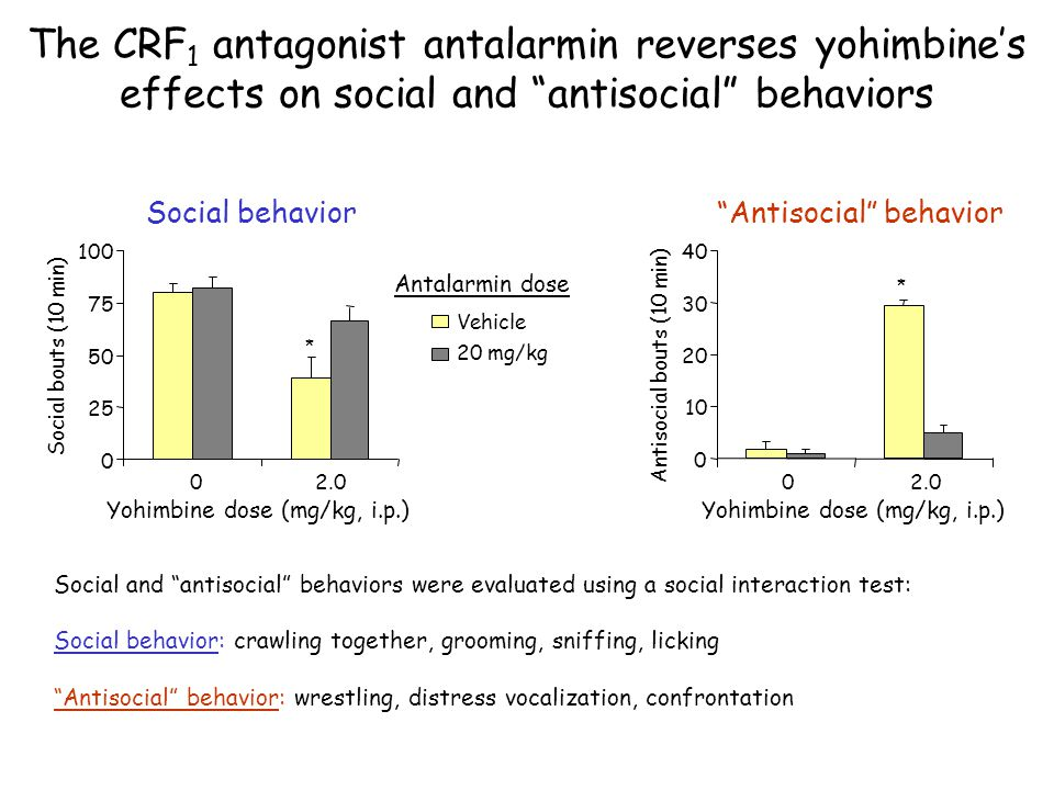 """The CRF 1 antagonist antalarmin reverses yohimbine's effects on social and """"antisocial"""" behaviors """"Antisocial"""" behavior Social and """"antisocial"""" behavi"""