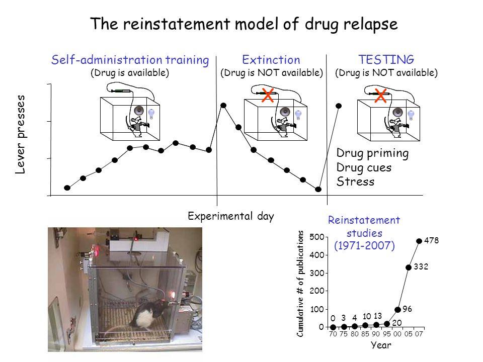 The reinstatement model of drug relapse Reinstatement studies (1971-2007) Year 0 3 4 10 13 20 96 332 478 0 100 200 300 400 500 707580859095000507 Cumu