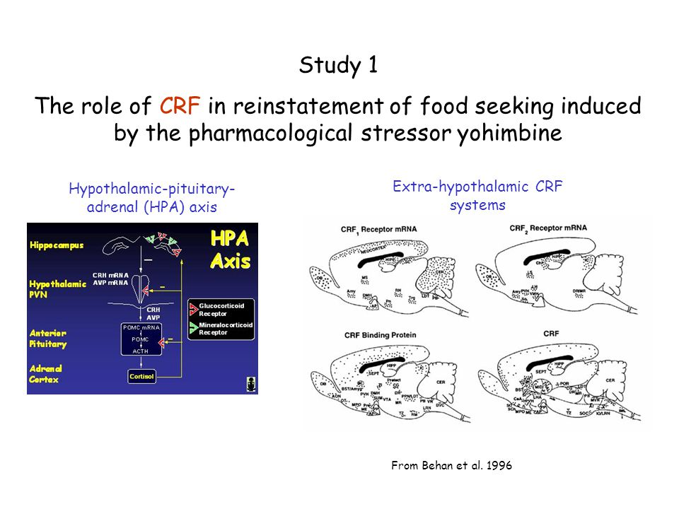 Study 1 The role of CRF in reinstatement of food seeking induced by the pharmacological stressor yohimbine Hypothalamic-pituitary- adrenal (HPA) axis
