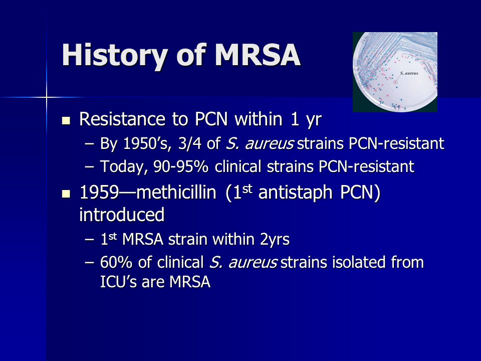 History of MRSA Resistance to PCN within 1 yr Resistance to PCN within 1 yr –By 1950's, 3/4 of S. aureus strains PCN-resistant –Today, 90-95% clinical