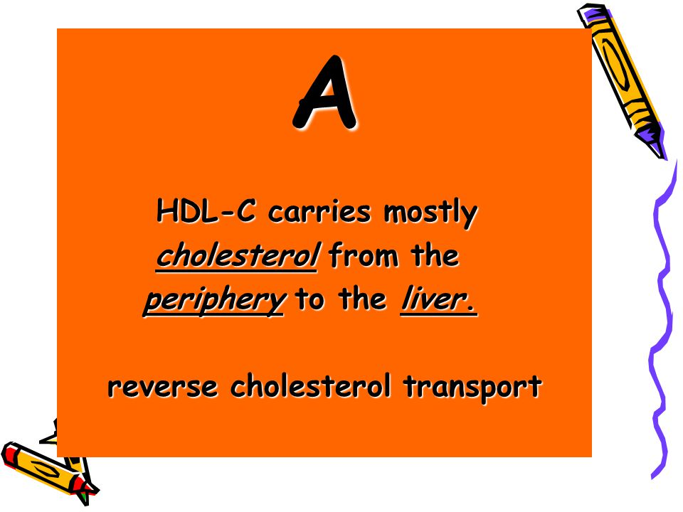 A HDL-C carries mostly HDL-C carries mostly cholesterol from the cholesterol from the periphery to the liver.