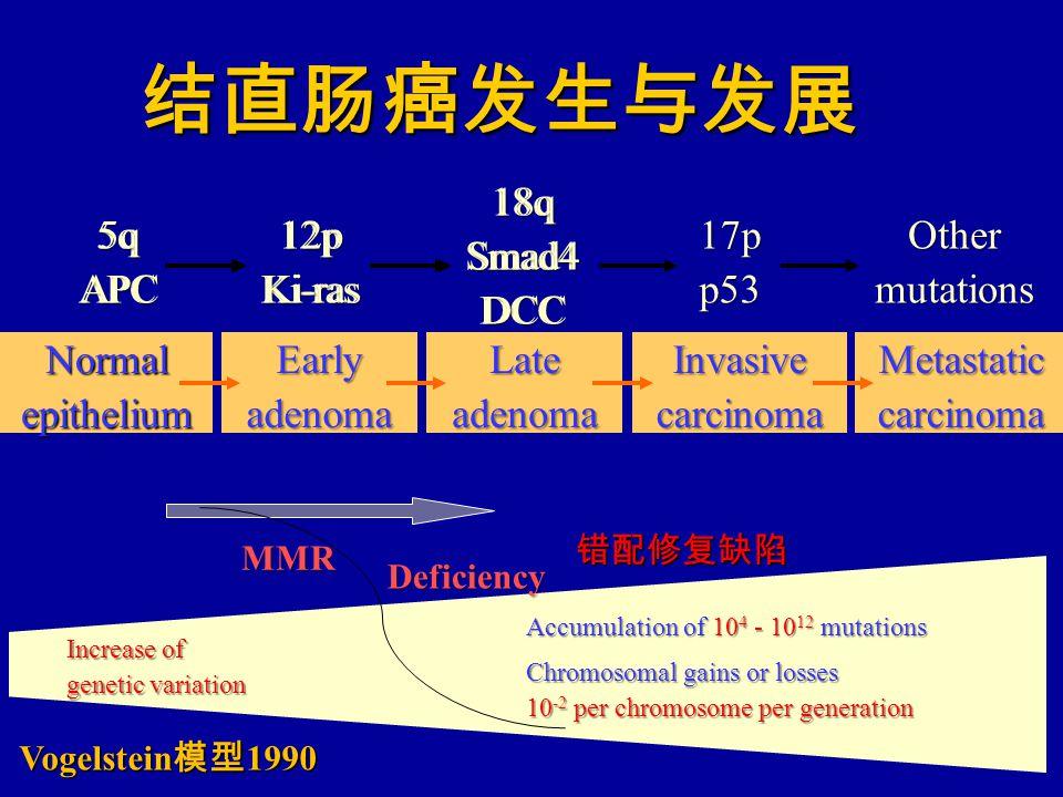 结直肠癌发生与发展 5q APC 12p Ki-ras 18q Smad4DCC Increase of genetic variation Accumulation of 10 4 - 10 12 mutations Chromosomal gains or losses 10 -2 per chromosome per generation EarlyadenomaLateadenomaInvasivecarcinomaMetastaticcarcinomaNormalepithelium 17p p53Othermutations 5q APC 12p Ki-ras 18q Smad4DCC MMR Deficiency 错配修复缺陷 Vogelstein 模型 1990