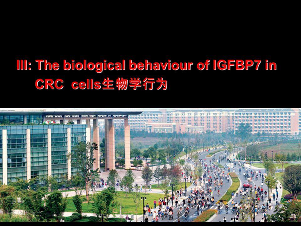 III: The biological behaviour of IGFBP7 in CRC cells 生物学行为 CRC cells 生物学行为