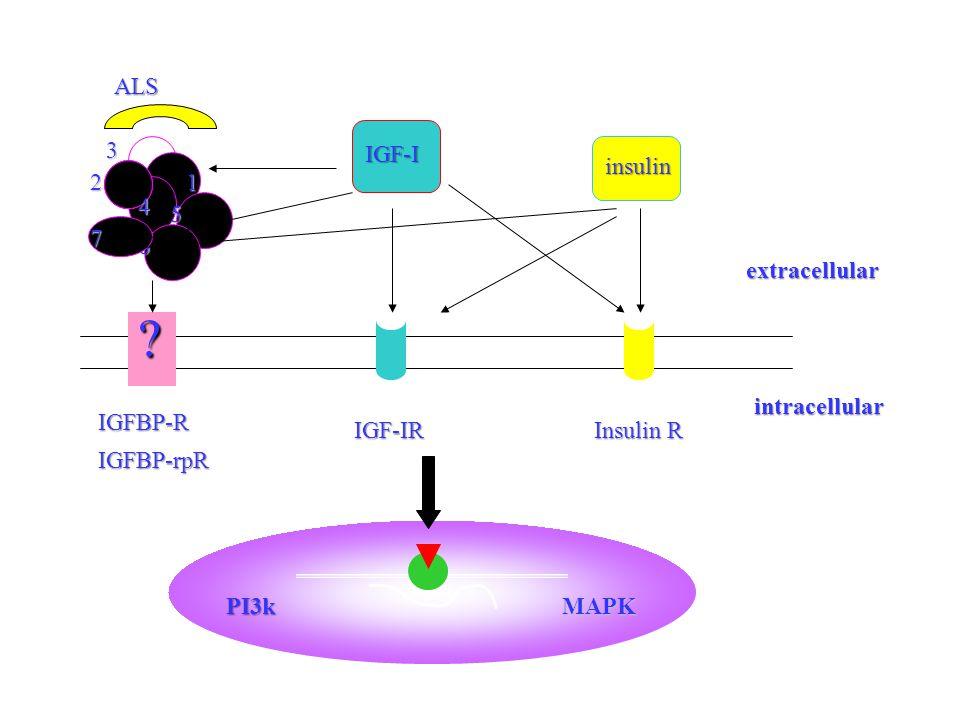 12 3 4 5 6 7 ALS IGF-I insulin extracellular .