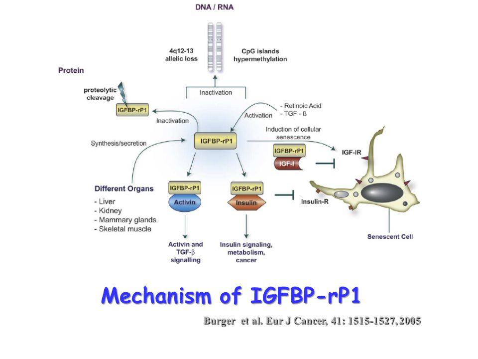 Mechanism of IGFBP-rP1 Burger et al. Eur J Cancer, 41: 1515-1527, 2005