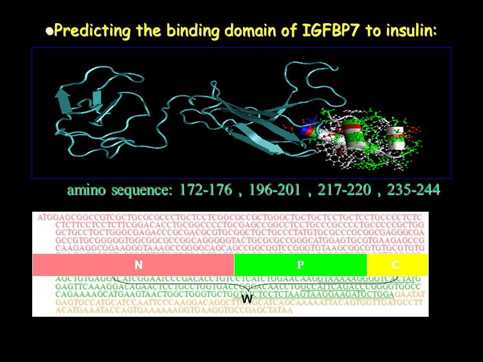 amino sequence: 172-176 , 196-201 , 217-220 , 235-244 Predicting the binding domain of IGFBP7 to insulin: Predicting the binding domain of IGFBP7 to insulin: ATGGAGCGGCCGTCGCTGCGCGCCCTGCTCCTCGGCGCCGCTGGGCTGCTGCTCCTGCTCCTGCCCCTCTC CTCTTCCTCCTCTTCGGACACCTGCGGCCCCTGCGAGCCGGCCTCCTGCCCGCCCCTGCCCCCGCTGG GCTGCCTGCTGGGCGAGACCCGCGACGCGTGCGGCTGCTGCCCTATGTGCGCCCGCGGCGAGGGCGA GCCGTGCGGGGGTGGCGGCGCCGGCAGGGGGTACTGCGCGCCGGGCATGGAGTGCGTGAAGAGCCG CAAGAGGCGGAAGGGTAAAGCCGGGGCAGCAGCCGGCGGTCCGGGTGTAAGCGGCGTGTGCGTGTG CAAGAGCCGCTACCCGGTGTGCGGCAGCGACGGCACCACCTACCCGAGCGGCTGCCAGCTGCGCGC CGCCAGCCAGAGGGCCGAGAGCCGCGGGGAGAAGGCCATCACCCAGGTCAGCAAGGGCACCTGCG AGCAAGGTCCTTCCATAGTGACGCCCCCCAAGGACATCTGGAATGTCACTGGTGCCCAGGTGTACTTG AGCTGTGAGGTCATCGGAATCCCGACACCTGTCCTCATCTGGAACAAGGTAAAAAGGGGTCACTATG GAGTTCAAAGGACAGAACTCCTGCCTGGTGACCGGGACAACCTGGCCATTCAGACCCGGGGTGGCC CAGAAAAGCATGAAGTAACTGGCTGGGTGCTGGTATCTCCTCTAAGTAAGGAAGATGCTGGAGAATAT GAGTGCCATGCATCCAATTCCCAAGGACAGGCTTCAGCATCAGCAAAAATTACAGTGGTTGATGCCTT ACATGAAATACCAGTGAAAAAAGGTGAAGGTGCCGAGCTATAA C N P W