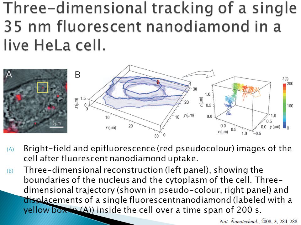 (A) Bright-field and epifluorescence (red pseudocolour) images of the cell after fluorescent nanodiamond uptake.