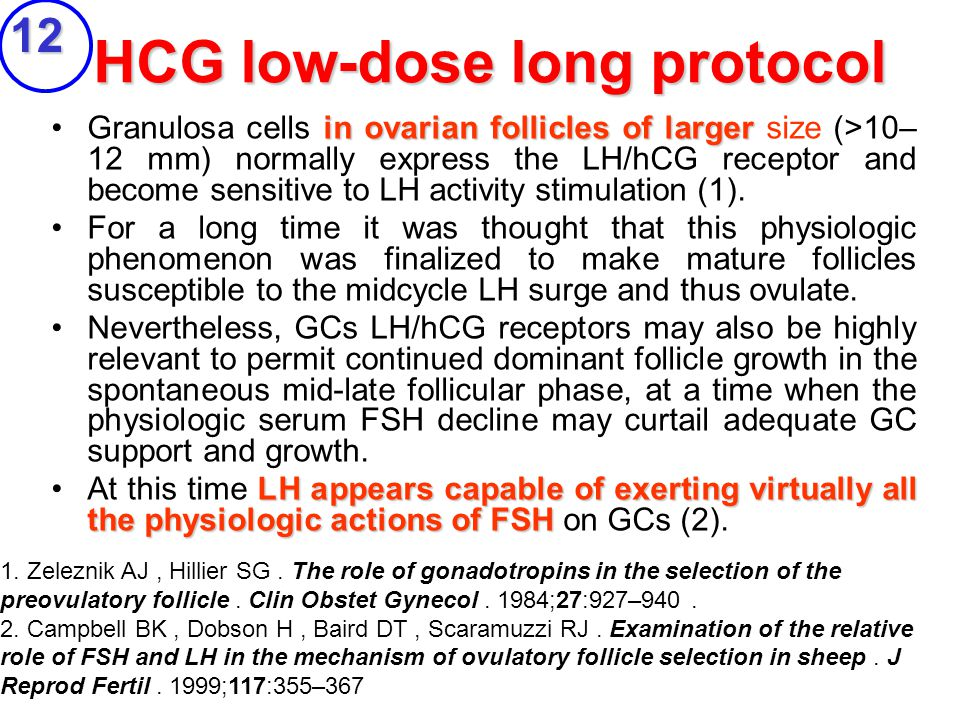 HCG low-dose long protocol in ovarian follicles of largerGranulosa cells in ovarian follicles of larger size (>10– 12 mm) normally express the LH/hCG