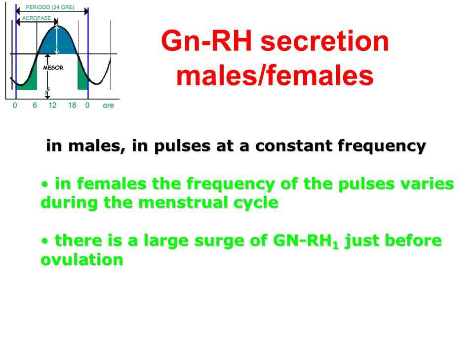 Gn-RH secretion males/females in males, in pulses at a constant frequency in males, in pulses at a constant frequency in females the frequency of the
