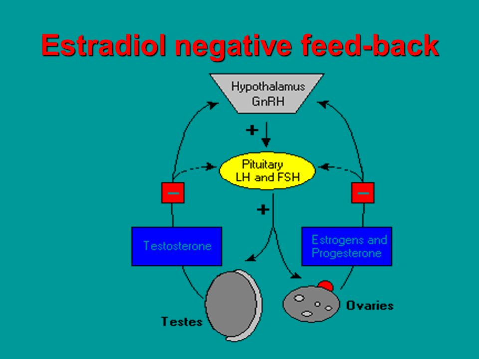 lean women reproductive performance was not poorer inverted U shape theory applies only to native oocyte conceptions.