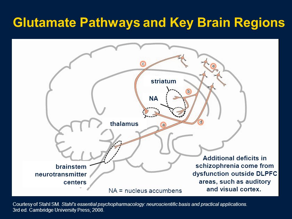Glutamate Pathways and Key Brain Regions thalamus striatum brainstem neurotransmitter centers NA NA = nucleus accumbens Additional deficits in schizophrenia come from dysfunction outside DLPFC areas, such as auditory and visual cortex.