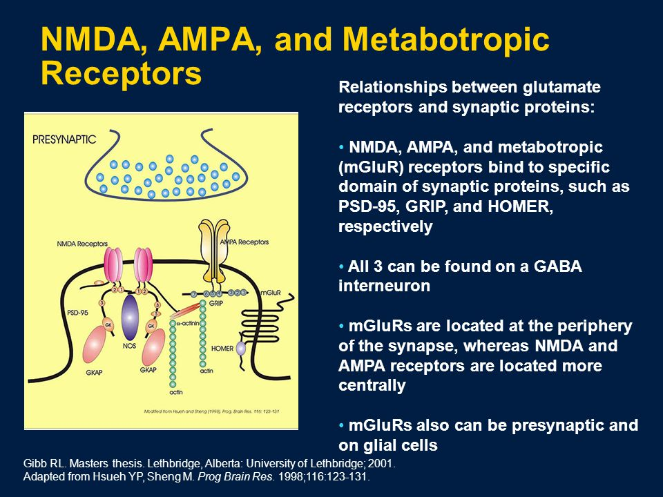 NMDA, AMPA, and Metabotropic Receptors Gibb RL. Masters thesis.
