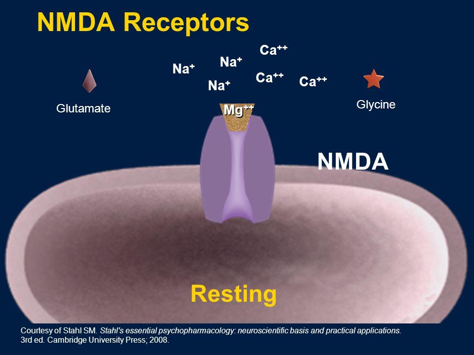 Na + Ca ++ Glutamate Resting Na + Ca ++ Mg ++ Glycine NMDA NMDA Receptors Courtesy of Stahl SM.