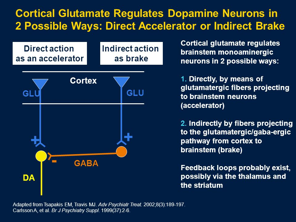 Cortical glutamate regulates brainstem monoaminergic neurons in 2 possible ways: 1.