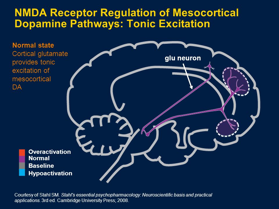 Normal state Cortical glutamate provides tonic excitation of mesocortical DA glu neuron NMDA Receptor Regulation of Mesocortical Dopamine Pathways: Tonic Excitation Courtesy of Stahl SM.