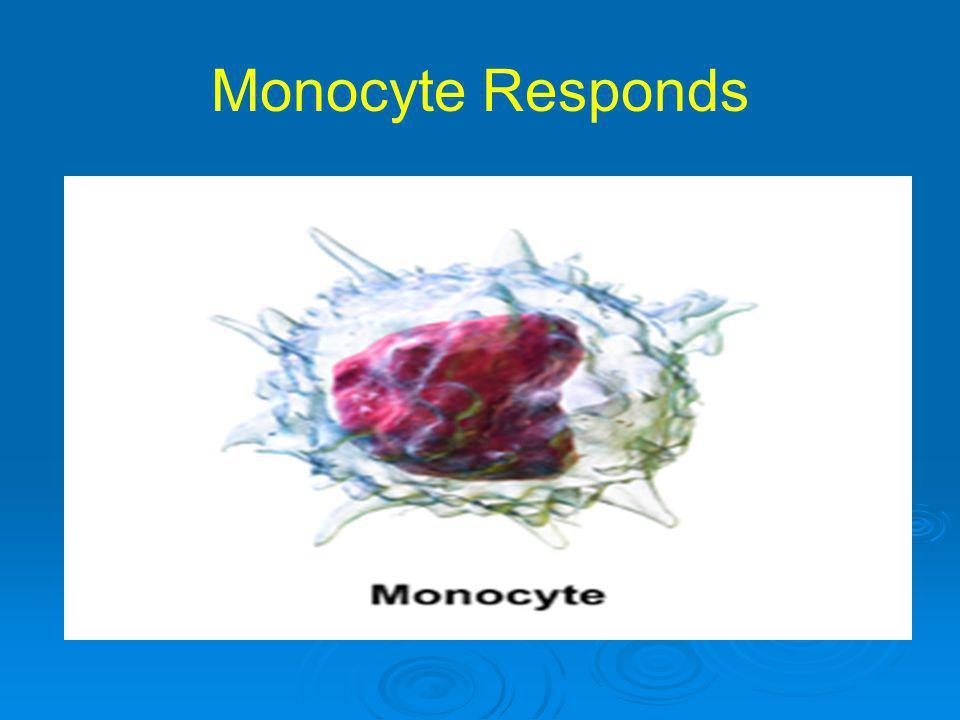 Monocyte Responds