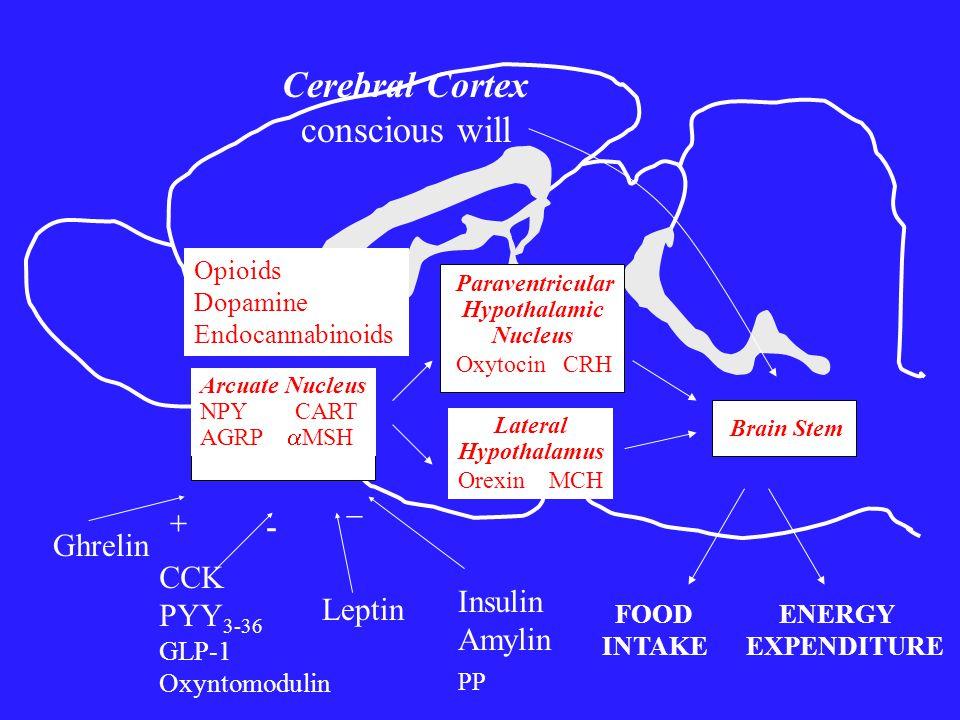 Arcuate Nucleus NPY CART AGRP  MSH Lateral Hypothalamus Orexin MCH Paraventricular Hypothalamic Nucleus Oxytocin CRH Brain Stem FOOD INTAKE ENERGY EXPENDITURE Cerebral Cortex conscious will Ghrelin  Leptin  CCK PYY 3-36 GLP-1 Oxyntomodulin Insulin Amylin PP Opioids Dopamine Endocannabinoids -