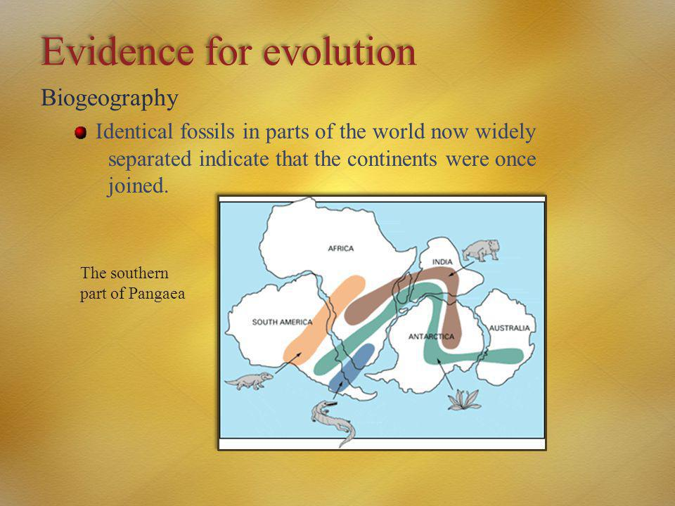 Evidence for evolution Biogeography Identical fossils in parts of the world now widely separated indicate that the continents were once joined. The so