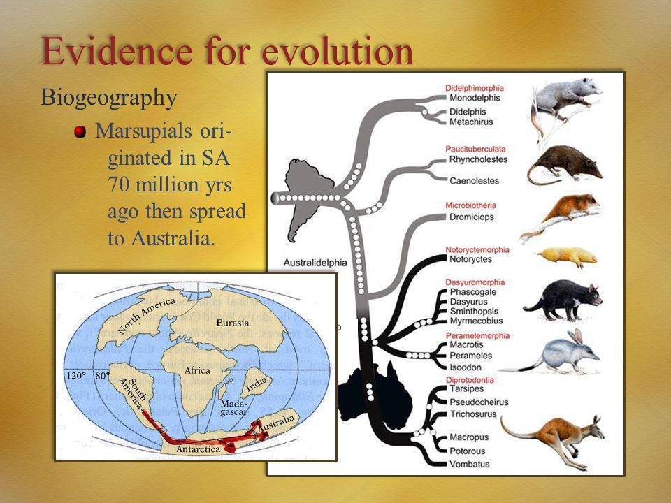 Evidence for evolution Biogeography Marsupials ori- ginated in SA 70 million yrs ago then spread to Australia.