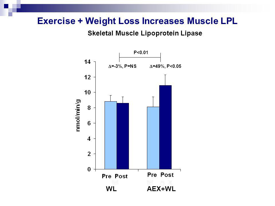  =-3%, P=NS  =49%, P<0.05 P<0.01 Exercise + Weight Loss Increases Muscle LPL WL AEX+WL Pre Post Skeletal Muscle Lipoprotein Lipase