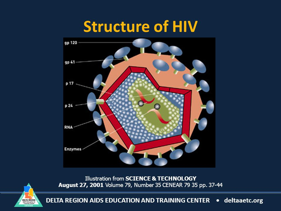 DELTA REGION AIDS EDUCATION AND TRAINING CENTER deltaaetc.org Structure of HIV Illustration from SCIENCE & TECHNOLOGY August 27, 2001 Volume 79, Number 35 CENEAR 79 35 pp.