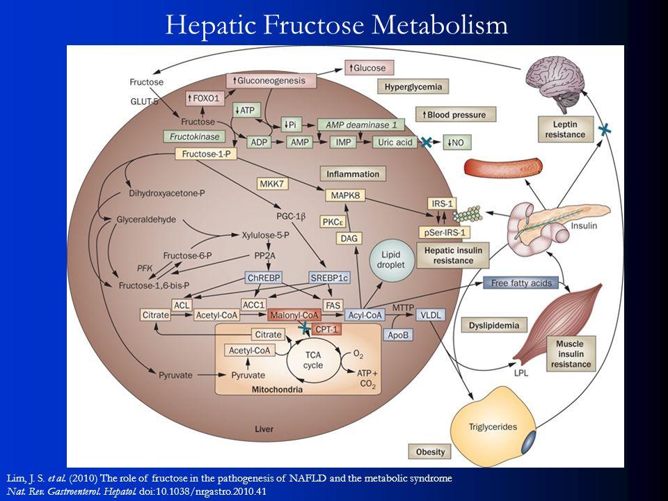 Hepatic Fructose Metabolism Lim, J. S. et al.