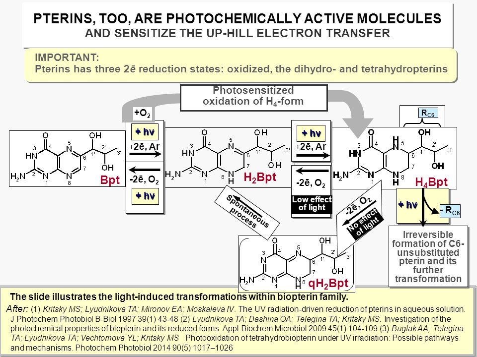 PTERINS, TOO, ARE PHOTOCHEMICALLY ACTIVE MOLECULES AND SENSITIZE THE UP-HILL ELECTRON TRANSFER The slide illustrates the light-induced transformations within biopterin family.